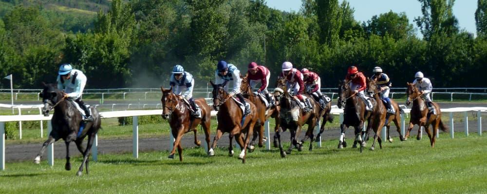 Hesteveddeløp odds på nett